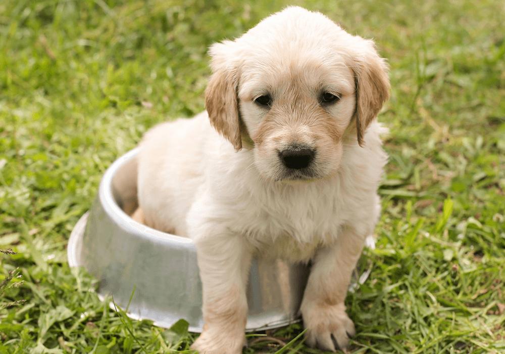 Aktivering af hund