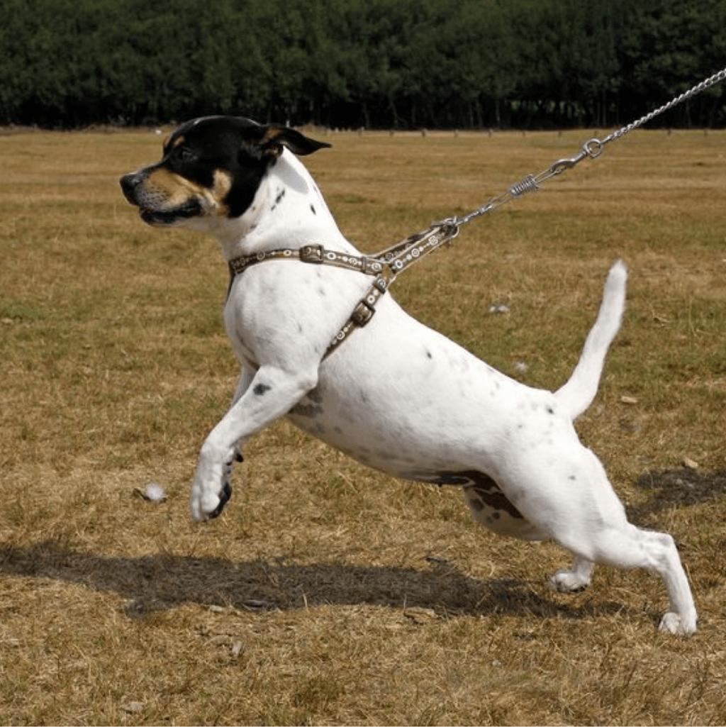 Hunden trækker