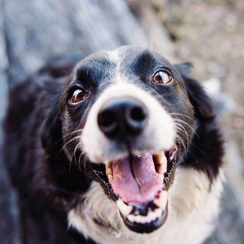 Glad hund efter BAT hundetræning i Ringsted
