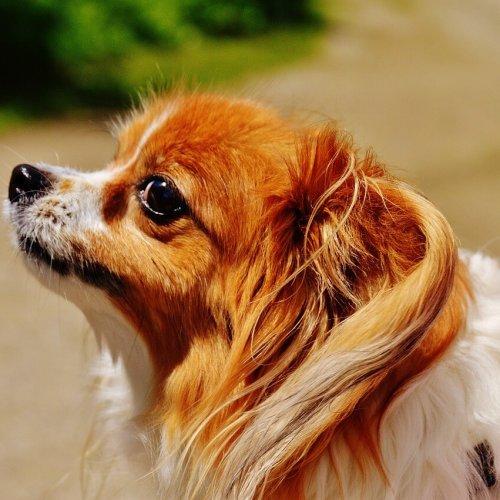 Lille hund til træning for at afhjælpe problemer med hunden
